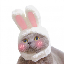 Chollo - Gorra para mascota, orejas de conejo