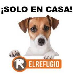 """Chollo - Gratis servicio """"Solo En Casa"""" de El Refugio"""