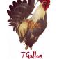 7 Gallos